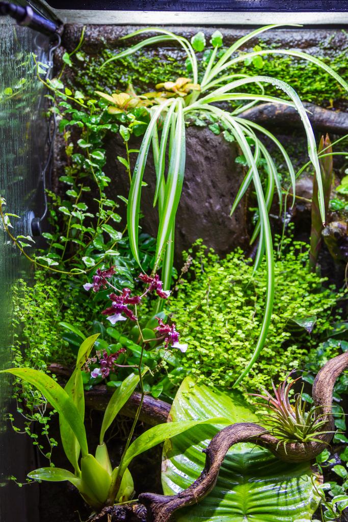 paludarium tropical phelsumas quadriocellata quadriocellata. Black Bedroom Furniture Sets. Home Design Ideas